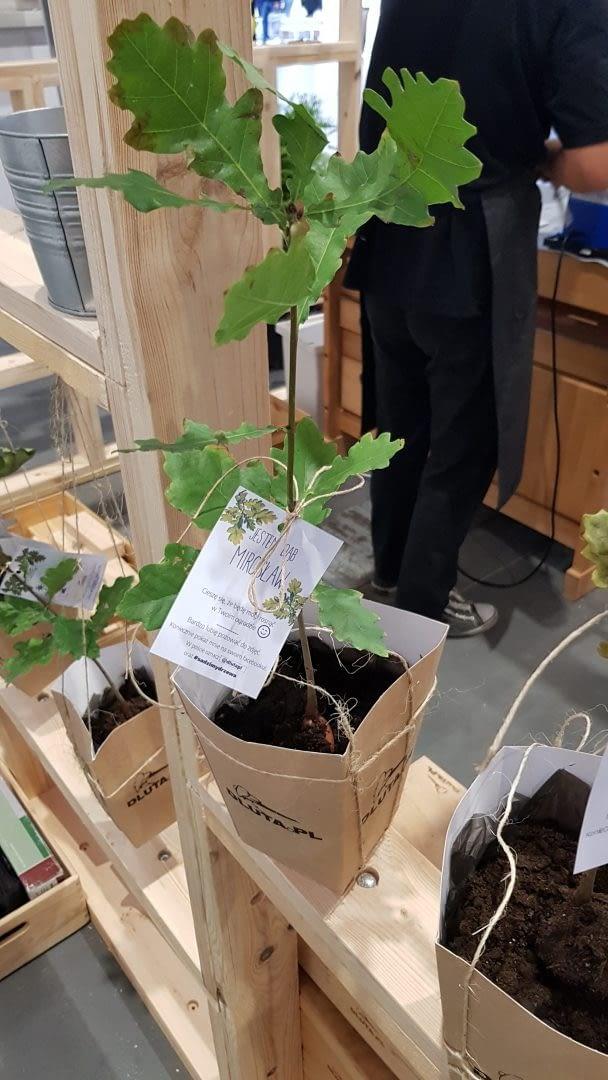 dlutapl-targi-drema2019-akcja-sadzimy-drzewa